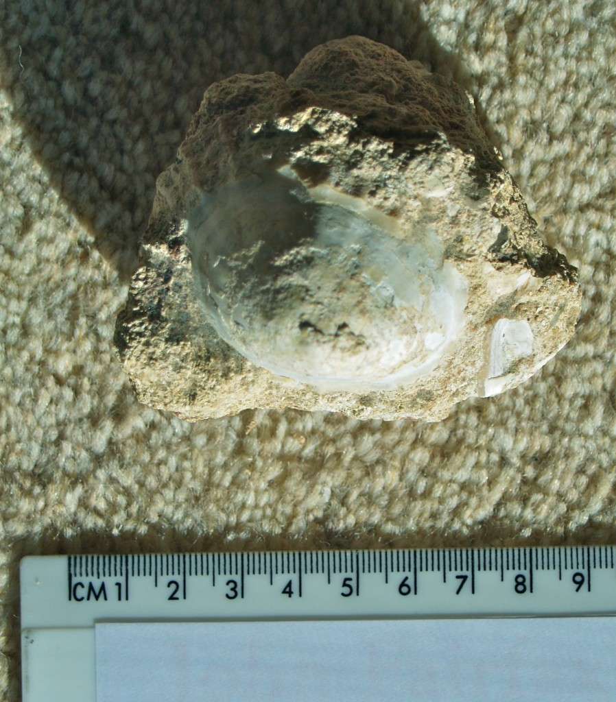 Shell 30,000 years old