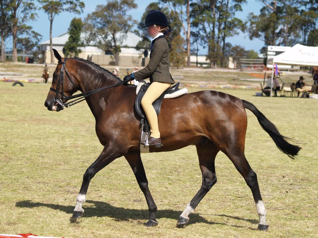 Horse 011